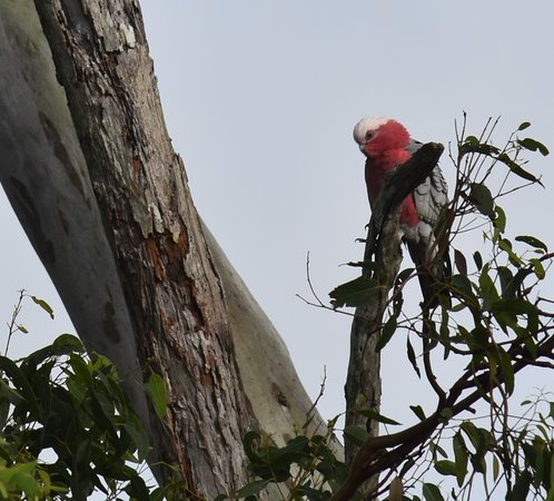 Birds love staying at Mapleton Springs