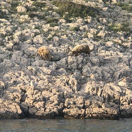 Kornati Islands National Park ภาพถ่าย