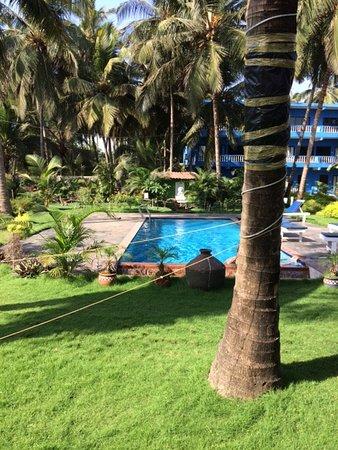 Morjim Coco Palms Beach Resort : The pool and garden