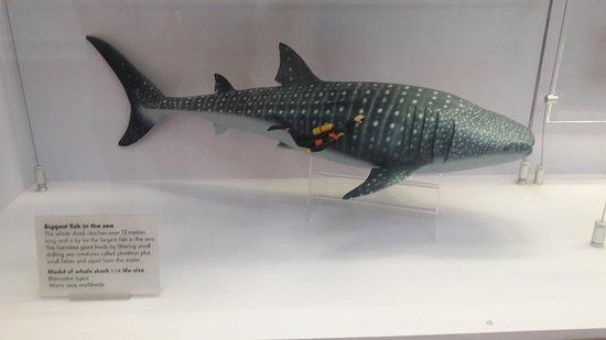 พิพิธภัณฑ์ประวัติศาสตร์ธรรมชาติ: Área de animales acuáticos