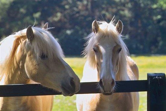 Beaufort, Ireland: Complimentary Horse Riding