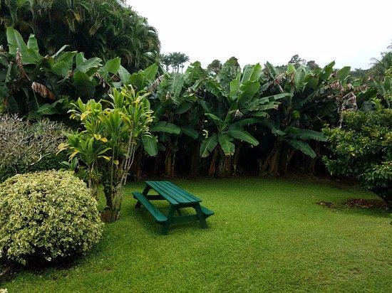 Pepeekeo, Havaí: 20180526_113909_large.jpg