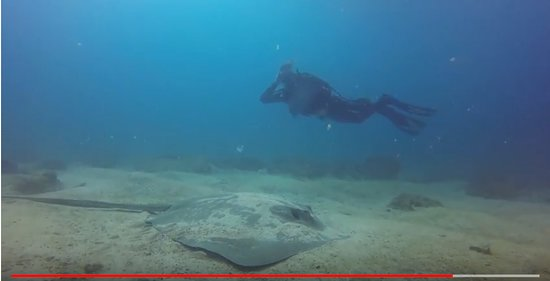Sirenas Diving Costa Rica: Posing with Southern Stingray