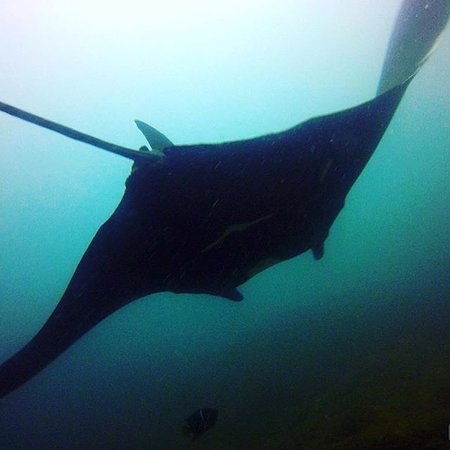 Sirenas Diving Costa Rica: Releasing the Rooster Fish. Sport fishing in the Gulf of Papagayo