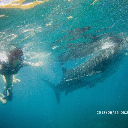 Oslob Whale Sharks Fotografie