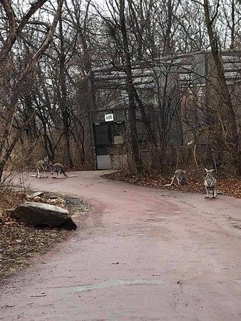 Kansas City Zoo照片