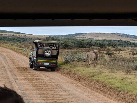 Shamwari Game Reserve, South Africa: IMG_20180524_155143_large.jpg