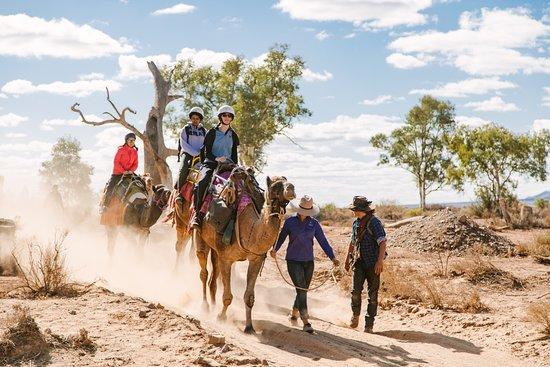 Hawker, ออสเตรเลีย: Into the desert with Camel Treks Australia