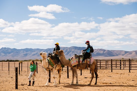 Camel Treks Australia: Ready to get get started!