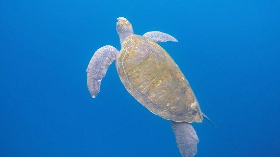 Tenerife snorkelling and kayaking: Turtles