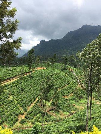 D.S Tours Day Tours: Kandy to Nuwara Eliya