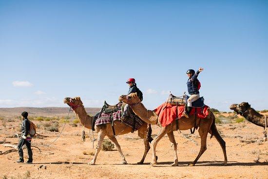 Camel Treks Australia: Let's go!