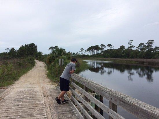 Inlet Beach, FL: Trail Bridge at park