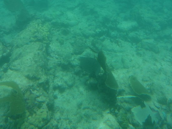 De Palm Tours: Atlantis Submarines Expedition: Passeio no fundo do mar