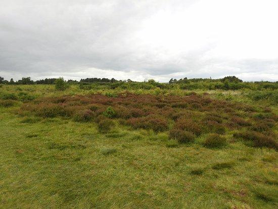 Culloden Battlefield照片