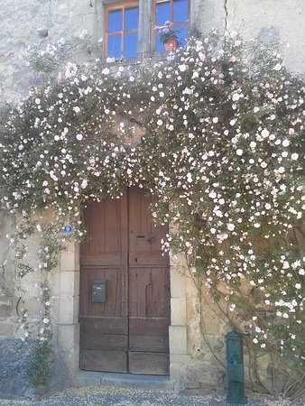 Camon, lovely rose over a door
