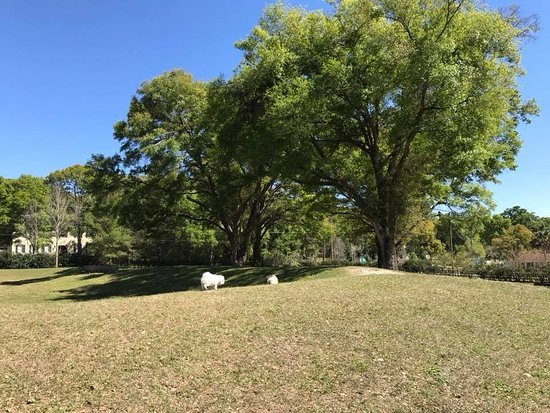 DeLand, FL: trees and grass make a nice enviorment