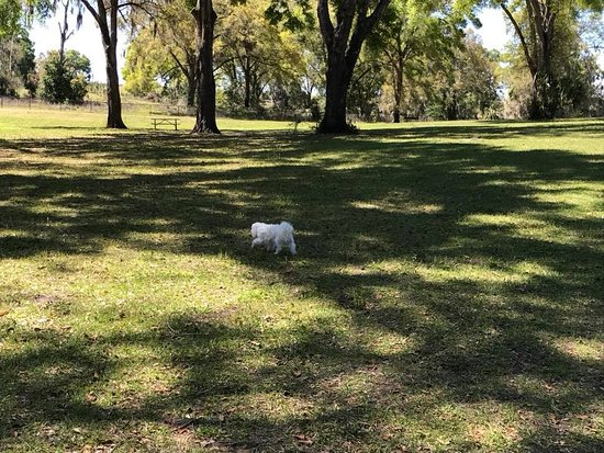 DeLand, FL: Large open space in the small dog section