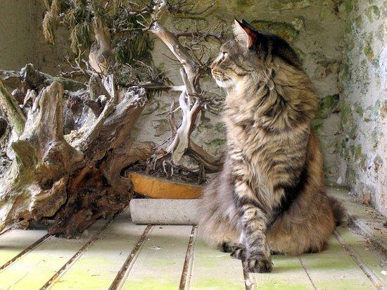 Saint-Pierre-de-Bailleul, Francia: Notre chat a découvert des souches décoratives au fond du jardin.