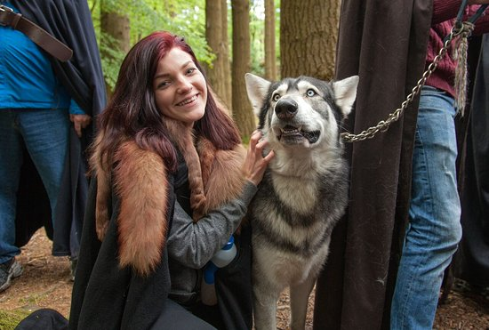 ‪GoT Direwolves‬