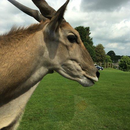 West Midland Safari Park Photo