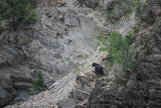 Canyon Raft Company: Black Bear checking out the rafts as they come by