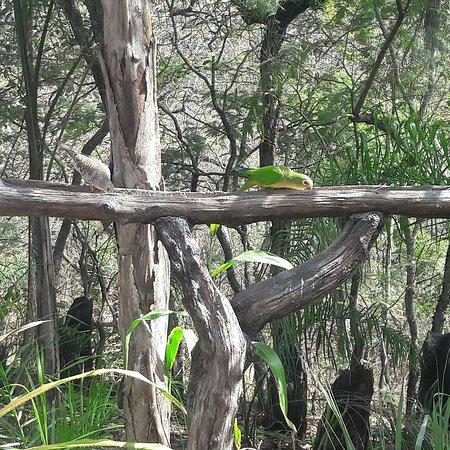 Pousada Chale do Bosque ภาพ