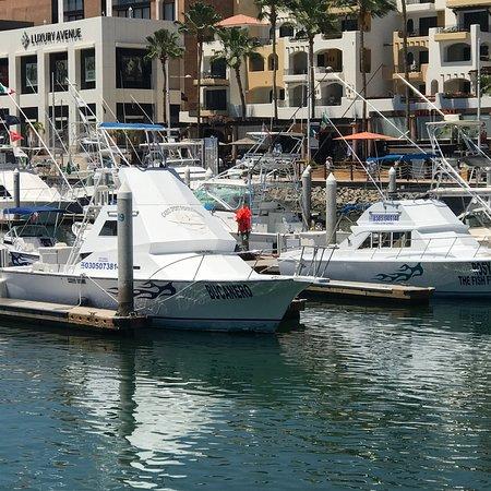 Cabo Sport Fishing Fleet ภาพถ่าย