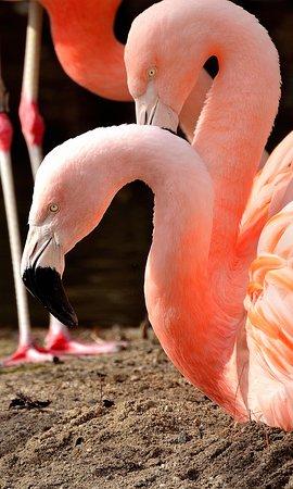 罗杰威廉斯公园动物园照片