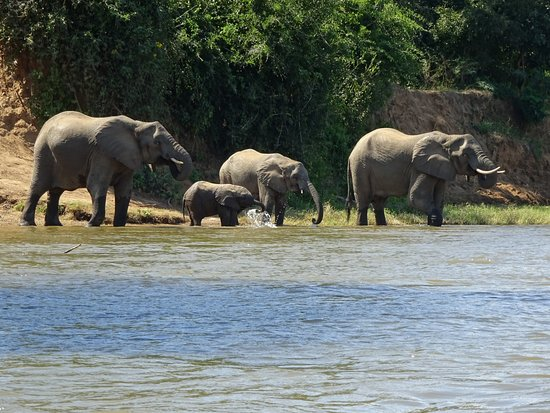 Lower Zambezi National Park, Zambia: Elephant sighting on our canoe trip