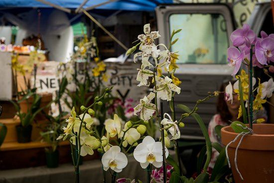Union Square Green Market: Orquideas