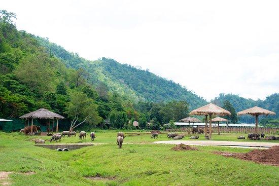 Elephant Nature Park : beautiful views!