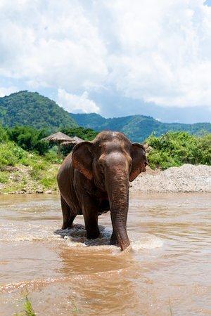 Elephant Nature Park : bathing time!