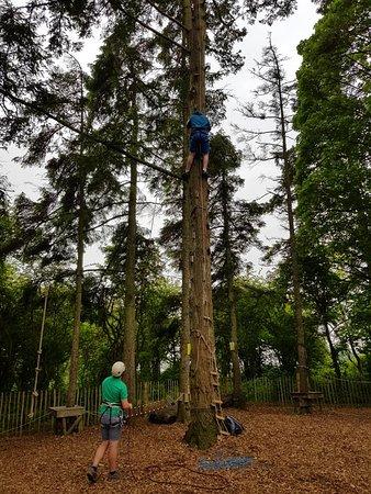 Northleach, UK: 20m tree climb
