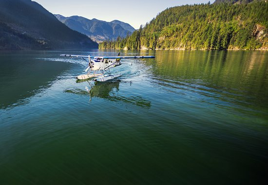 Sechelt, Kanada: Beaver on the water in Hotham Sound