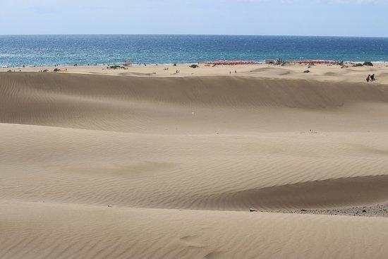 Reserva Natural Especial de Las Dunas de Maspalomas照片