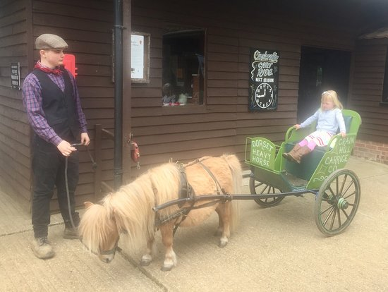 Dorset Heavy Horse Farm Park: how cute is this???