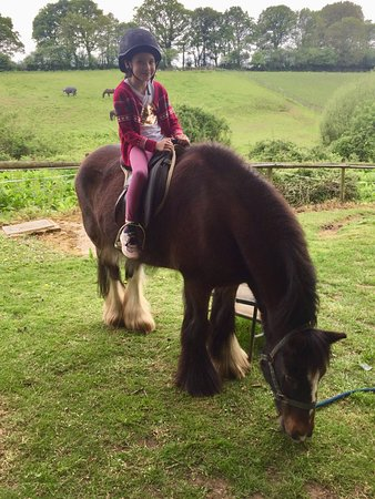 Dorset Heavy Horse Farm Park: Pony ride is a couple of pounds extra charge