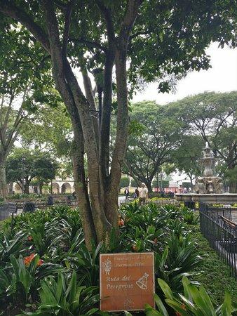เดอะพลาซา: tree inside la plaza central
