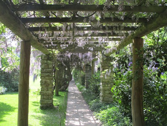 Nymans Gardens and House: The beautiful wisteria