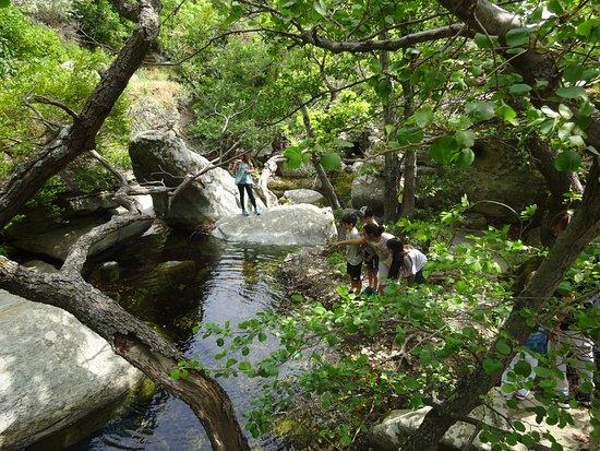 Waterfalls of Pithara: Το ποταμάκι της Πυθάρας 3