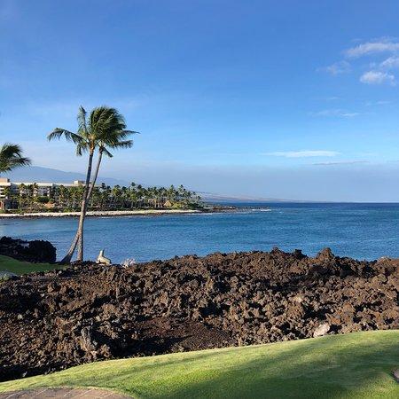 Hilton Waikoloa Village: Loved every minute of our vacation at the Hilton Waikoloa.  I can't wait to go back.