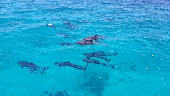 Delfin Schwimmen mit Bob Satey Photo