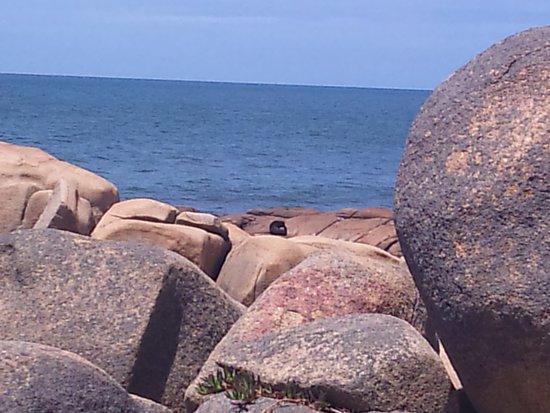 写真La Perla del Cabo枚