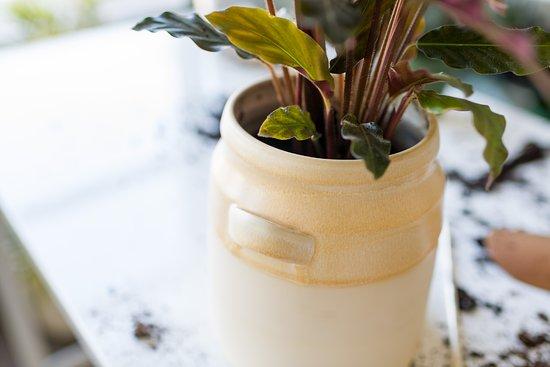 Rookwood: Vine Planter - Spring Exclusive