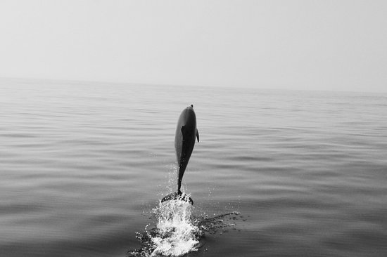 Whale Watch West Cork : High jumper in front of the boat