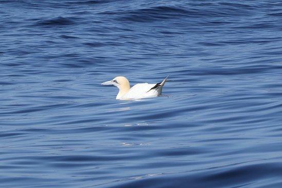 Whale Watch West Cork: Sea bird
