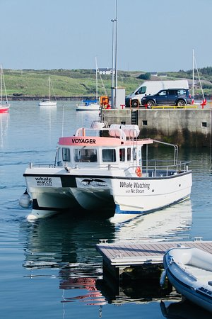 Whale Watch West Cork: Nic's boat of discovery