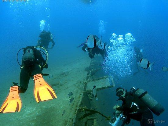 Cyprus Diving Adventures : Cyprus diving