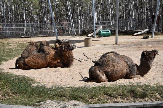 Assiniboine Park Zoo照片